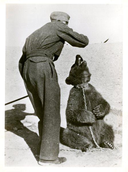 Miś Wojtek z żołnierzem Armii Polskiej na Wschodzie, Iran