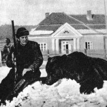 Mościcki_z_niedźwiedziem_wiki.jpg